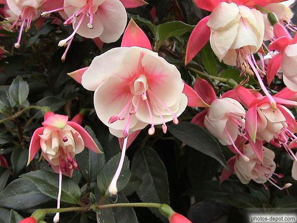 Fleur fushia rose blanc for Chambre rose fushia et blanc