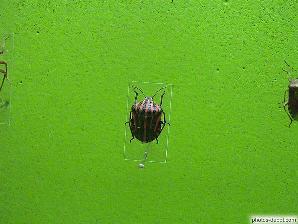 Insecte en tricot ray rouge et noir - Insecte rouge et noir ...