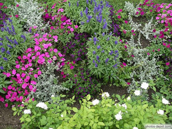 Plants de fleurs dans les jardins de chenonceaux for Plants de fleurs