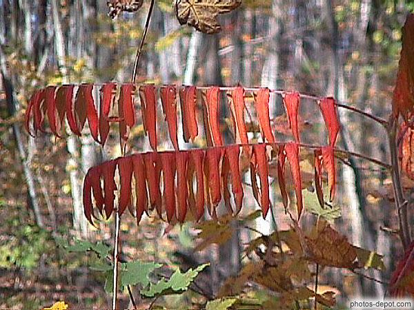 Plante aux feuilles rouges - Plante a feuilles rouges ...
