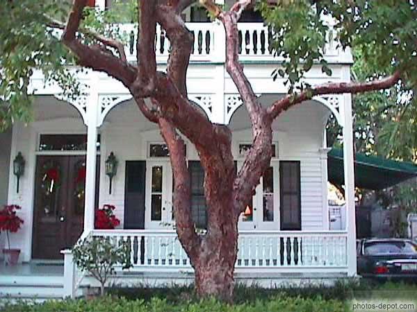 arbre tortueux devant maison coloniale. Black Bedroom Furniture Sets. Home Design Ideas